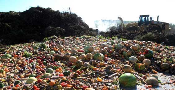 Ubo: App per lottare e aiutare contro lo spreco di cibo